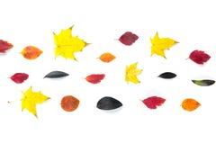 Collection de belles feuilles d'automne colorées d'isolement sur le fond blanc Images stock
