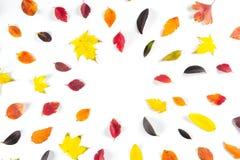 Collection de belles feuilles d'automne colorées d'isolement sur le fond blanc Images libres de droits