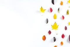Collection de belles feuilles d'automne colorées d'isolement sur le fond blanc Image stock