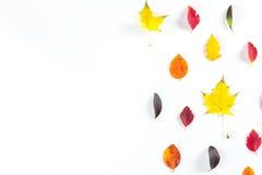 Collection de belles feuilles d'automne colorées d'isolement sur le fond blanc Photographie stock