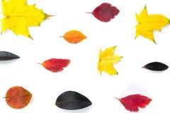 Collection de belles feuilles d'automne colorées d'isolement sur le fond blanc Photos libres de droits