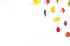 Collection de belles feuilles d'automne colorées d'isolement sur le fond blanc Photographie stock libre de droits