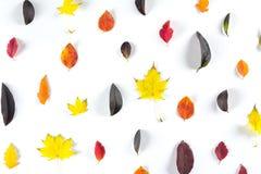 Collection de belles feuilles d'automne colorées d'isolement sur le fond blanc Photos stock