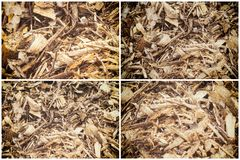 Collection de bois Chip Mulch d'écorcement image stock