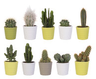 Collection de cactus Photos stock