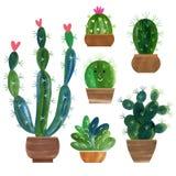 Collection de cactus Photo stock