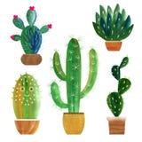 Collection de cactus Photo libre de droits
