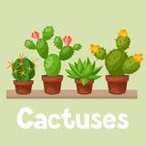 Collection de cactus abstraits dans le pot de fleur dessus Photographie stock libre de droits