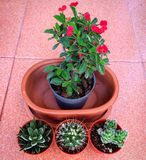 Collection de Castus Photos libres de droits