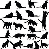Collection de chats Photographie stock