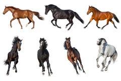 Collection de cheval d'isolement Image libre de droits