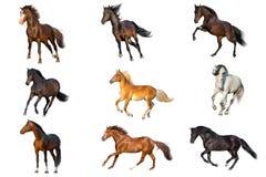 Collection de cheval d'isolement photographie stock