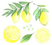 Collection de citron Illustration Stock