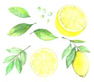 Collection de citron Illustration de Vecteur