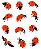 Collection de coccinelles Images libres de droits