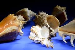 Collection de coquillages Image libre de droits