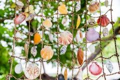 Collection de coquillages marins accrochant sur la grille Photo libre de droits