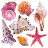Collection de coquilles de mer images libres de droits