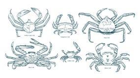Collection de dessins élégants de divers types de crabes Paquet de beaux animaux marins ou crustacés tirés par la main illustration stock