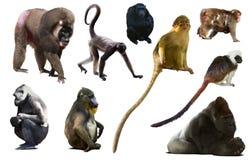 Collection de différents singes photo libre de droits
