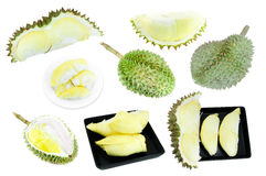 Collection de durian, roi des fruits d'isolement sur le fond blanc Photographie stock