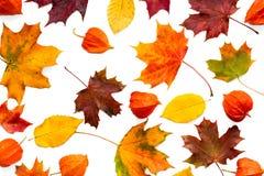 Collection de feuilles d'automne colorées et de fleurs de physalis d'isolement sur le fond blanc Photo libre de droits