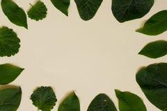 Collection de feuilles de jardin d'isolement sur le fond de crème Images libres de droits