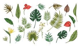 Collection de feuilles tropicales de diverses usines d'isolement sur le fond blanc Ensemble de feuillage exotique de taille diffé illustration libre de droits