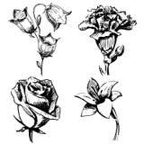 Collection de fleurs Photographie stock libre de droits