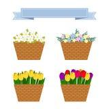 Collection de fleurs colorées de ressort et d'été Image libre de droits