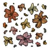 Collection de fleurs d'abrégé sur ensemble Image stock