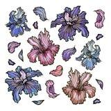Collection de fleurs d'iris d'ensemble Image stock