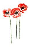 Collection de fleurs de pavot d'aquarelle illustration libre de droits