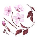 Collection de fleurs et de feuilles d'Apple d'isolement sur le fond blanc 1 illustration stock