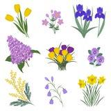 Collection de fleurs jaunes et pourpres sur un fond blanc illustration stock