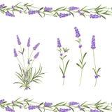 Collection de fleurs de la Provence L'ensemble de lavande fleurit des ?l?ments Kit violet de fleurs Paquet d'impression d'?t? de  image stock