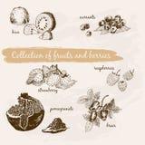 Collection de fruits et de baies illustration libre de droits