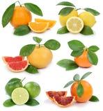 Collection de fruits organiques de pamplemousse de citron de mandarine d'oranges i Photographie stock libre de droits