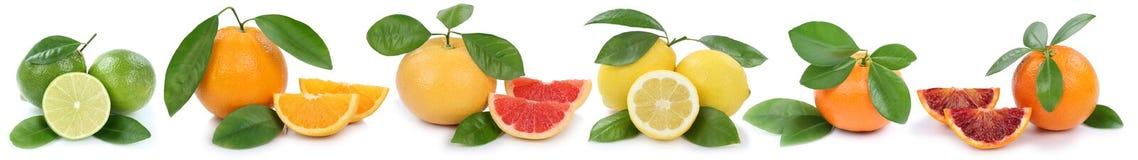 Collection de fruits organiques de pamplemousse de citron de mandarine d'oranges i Photographie stock