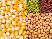 Collection de grain photo stock