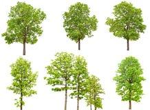Collection de groupe d'arbre d'isolement sur le fond blanc Photo stock