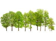 Collection de groupe d'arbre d'isolement sur le fond blanc Photos stock