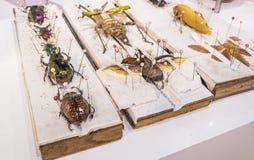 Collection de guêpes et d'insectes de papillon de scarabée en général Photos libres de droits