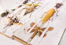 Collection de guêpes et d'insectes de papillon de scarabée en général Images stock