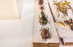 Collection de guêpes et d'insectes de papillon de scarabée en général Image libre de droits