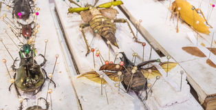 Collection de guêpes et d'insectes de papillon de scarabée en général Photos stock