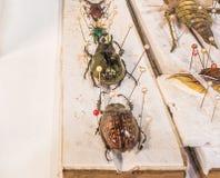 Collection de guêpes et d'insectes de papillon de scarabée en général Image stock