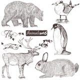 Collection de hauts animaux détaillés illustration libre de droits
