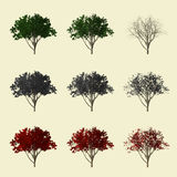 collection de l'arbre 3d Photos stock