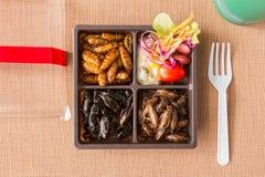 Collection de nourriture d'insecte photo stock